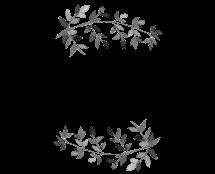 monicacustodio